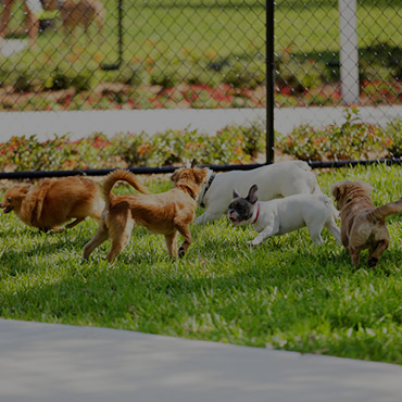 Large Dog Park at Parkview Terrace Apartments
